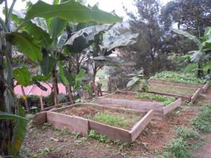 Vegetable production in raised beds in Kabale, Uganda.
